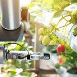 برداشت سبزیجات به کمک رباتها  width=