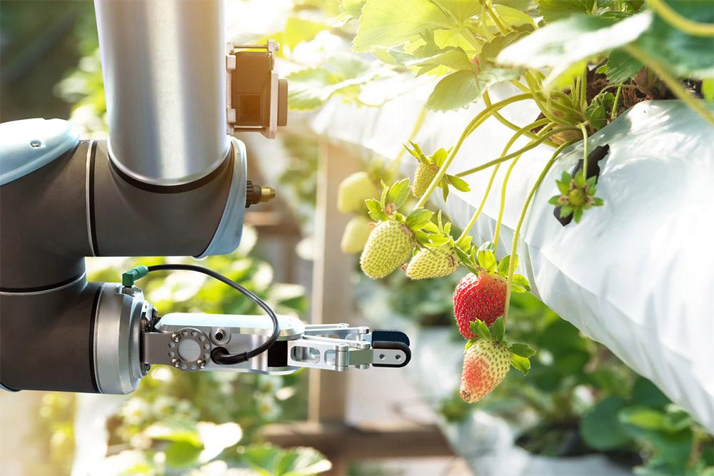 برداشت سبزیجات به کمک رباتها